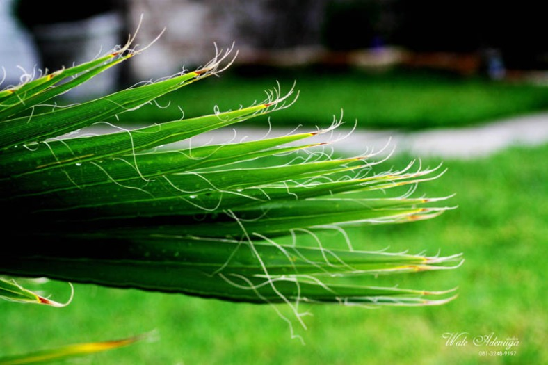 Plant, green, walkway, grass, Wale Adenuga Photography