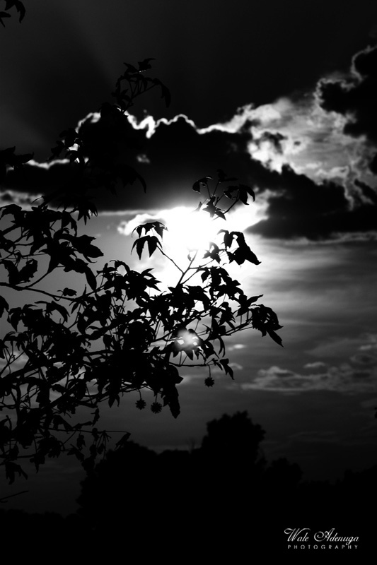 silhouette, tree, sunlight, sun, Wale Adenuga Photography